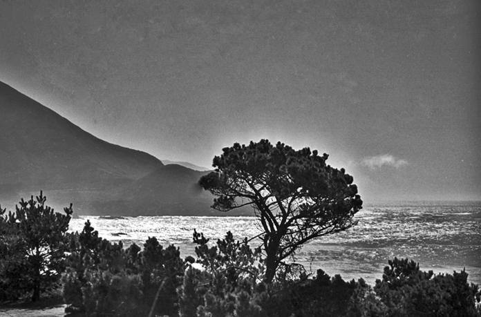 Coastal Tree 7x4