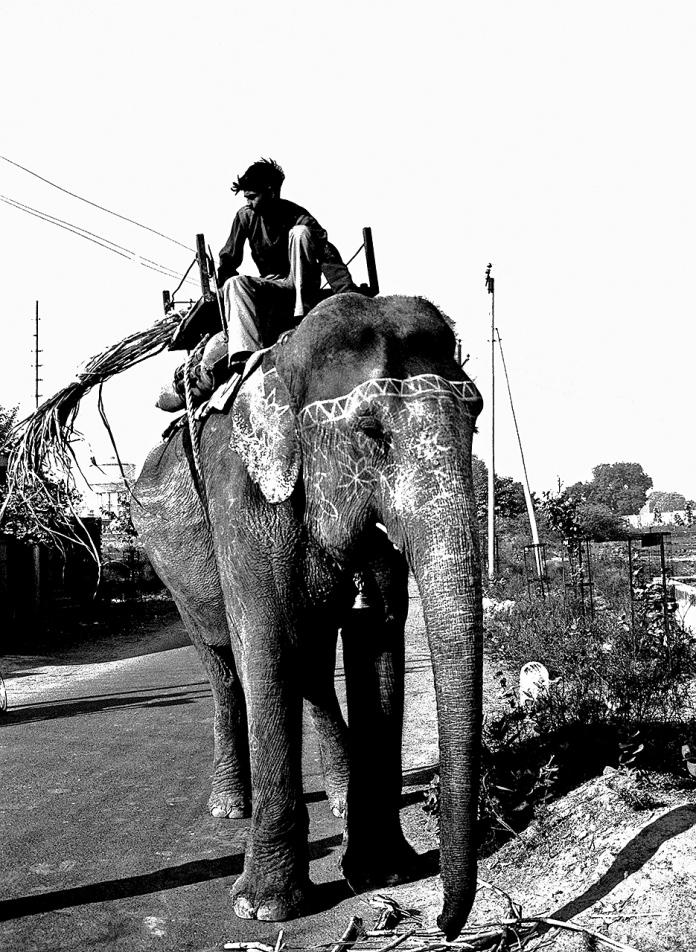 ELEPHANT PILOT